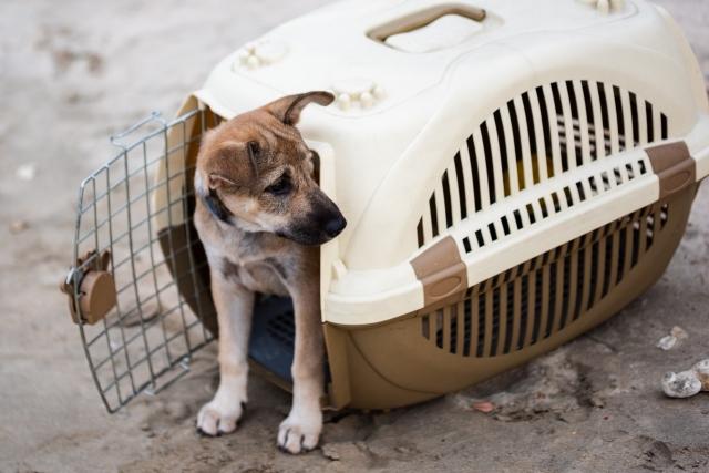 新幹線ペット・犬